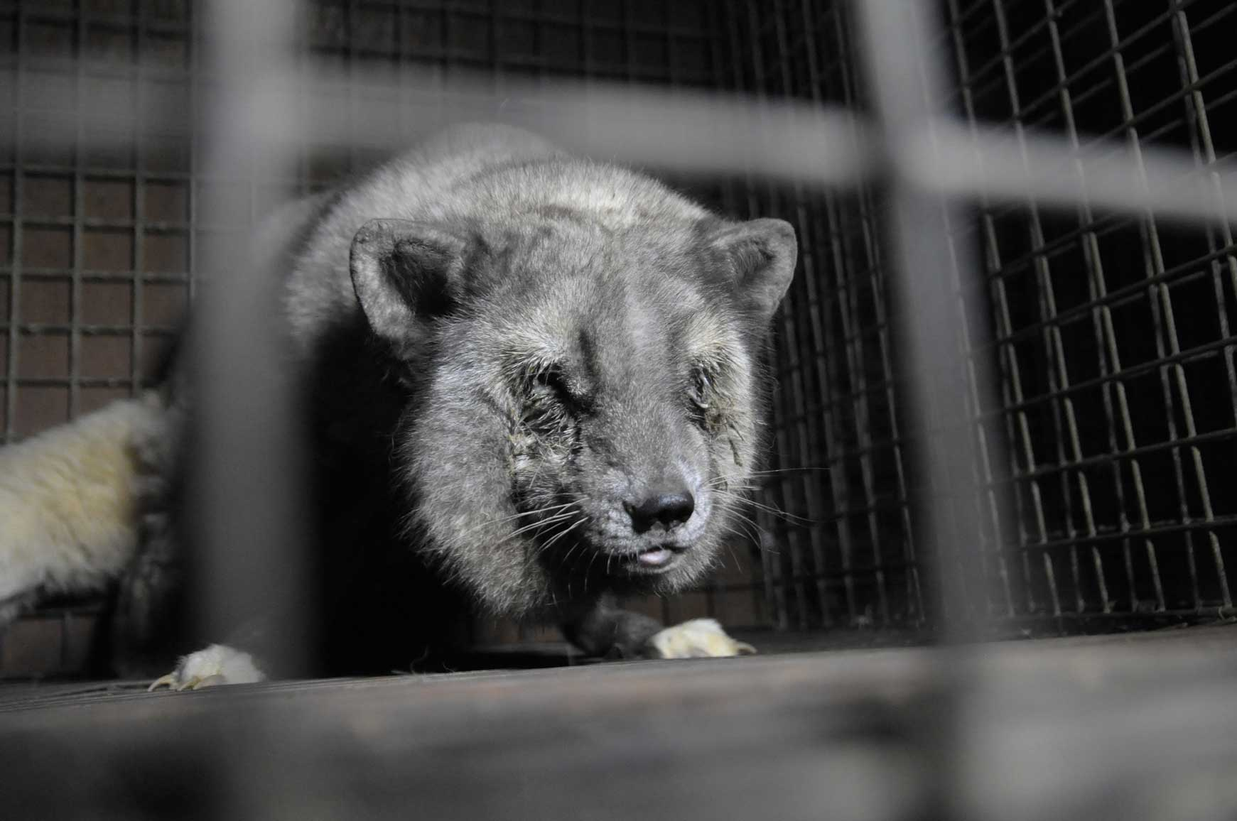 Fur production in China