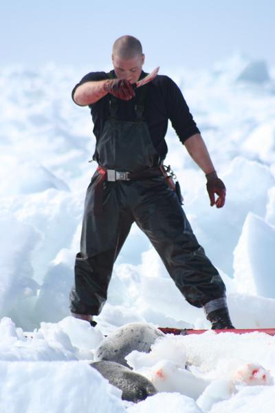 Canadian seal hunt