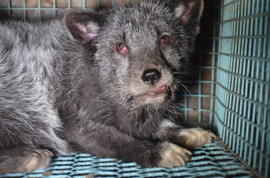Cat Vs Dog Fur