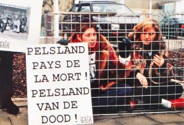 Pelsland bankrupt