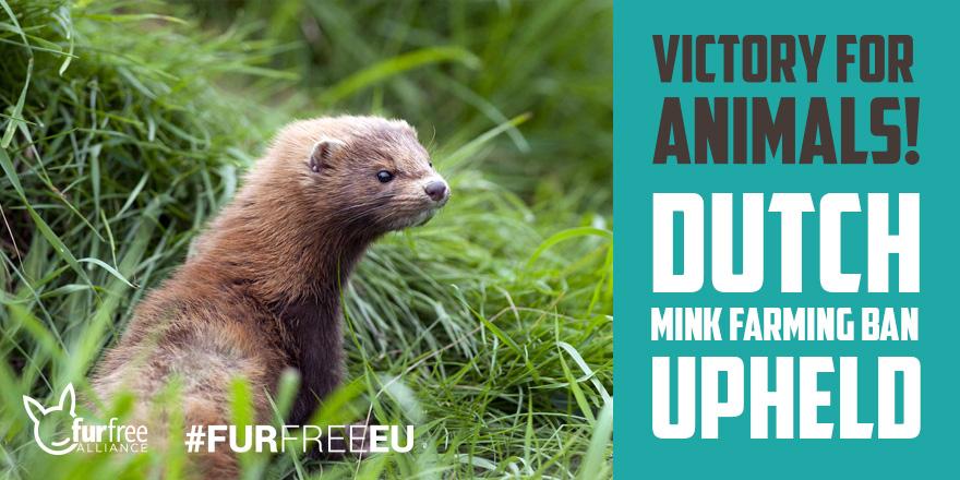dutch mink farming ban upheld