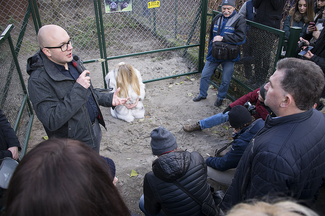 Poznan zoo adopt rescued foxes from fur farms