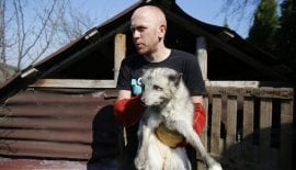 Seventeen foxes rescued from Polish fur farm