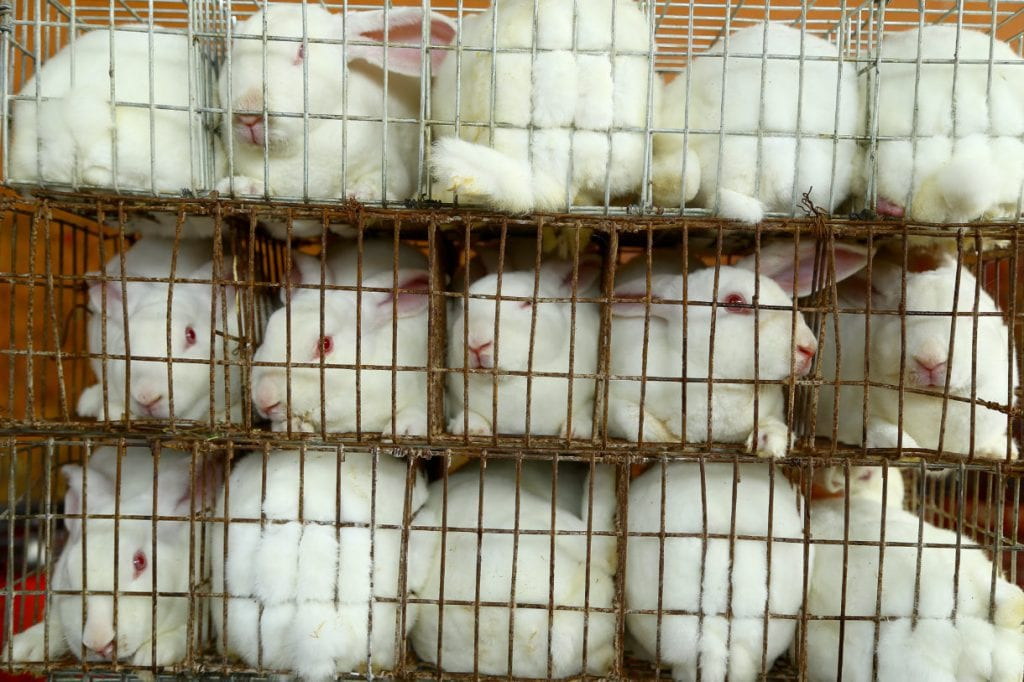 rabbit fur farm china