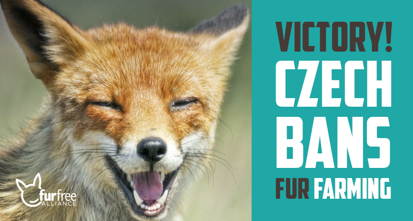 Czech bans fur farming