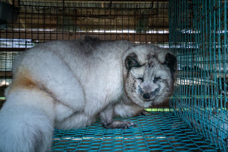 © Oikeutta eläimille
