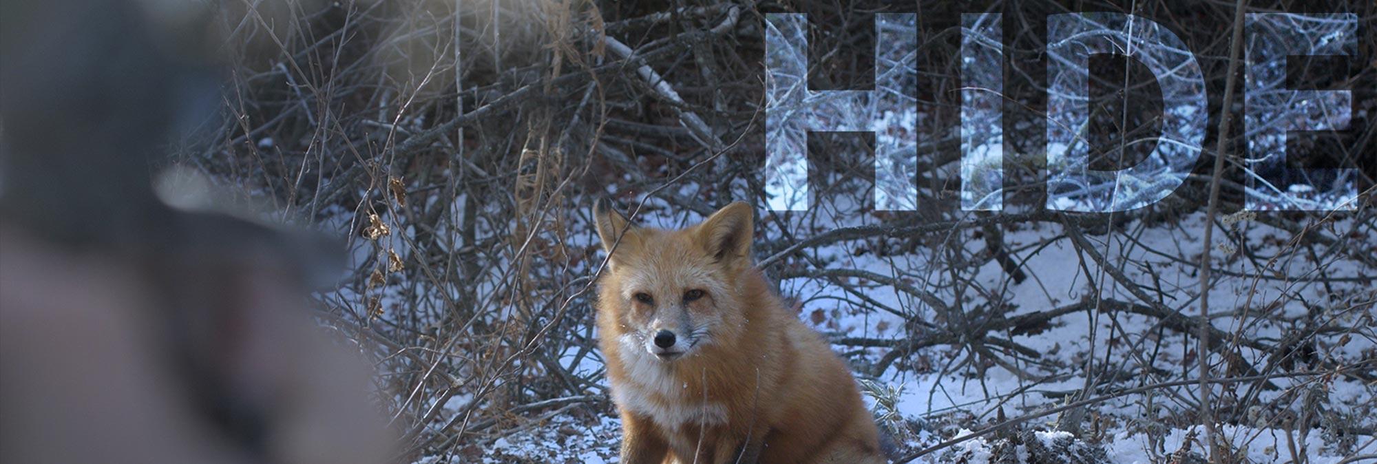 Hide fox